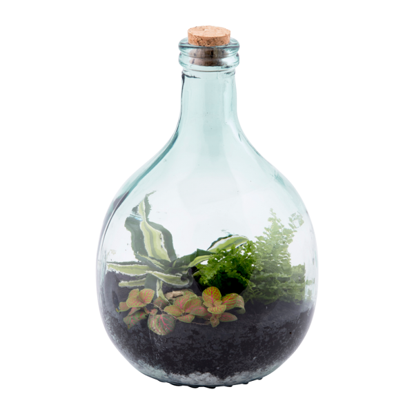 Terrarium Bottle 5 Litre Set