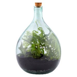 Terrarium Bottle 15 Litre Set