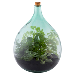 Terrarium Bottle 35 Litre Set